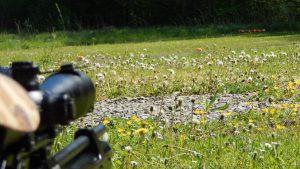 AirGhandi mit der Steyr LG110 HFT Hunting beim plinken
